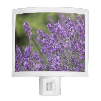 Pretty Lavender Fields Night Light