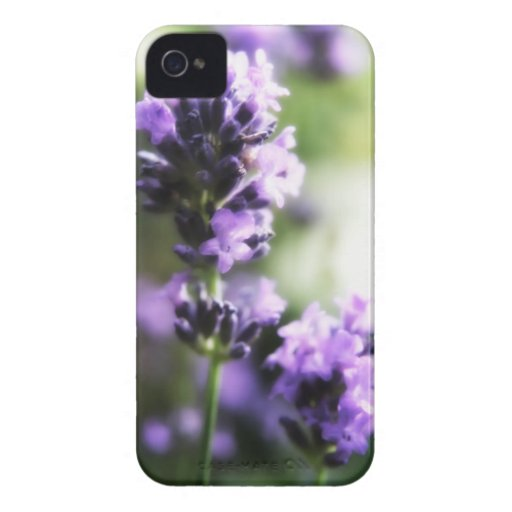 Pretty lavender flowers floral iPhone 4 cases