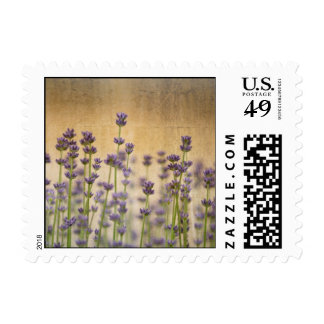 Pretty Lavender Flowers Postage