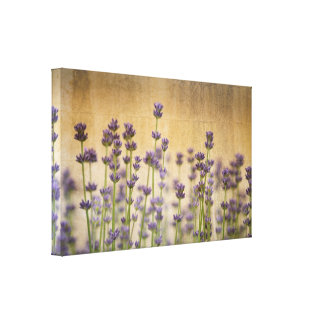 Pretty Lavender Flowers Stretched Canvas Print