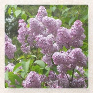 Pretty Lilac Bush Glass Coaster