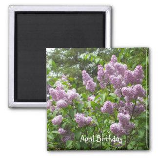 Pretty Lilac Bush Magnet