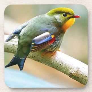 Pretty Little Bird Drink Coaster