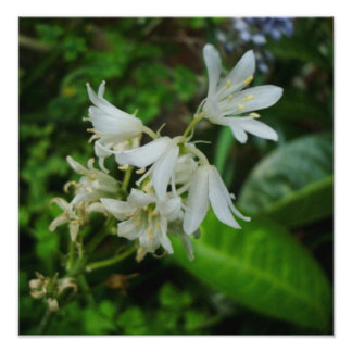 Pretty Little White Flowers Photo