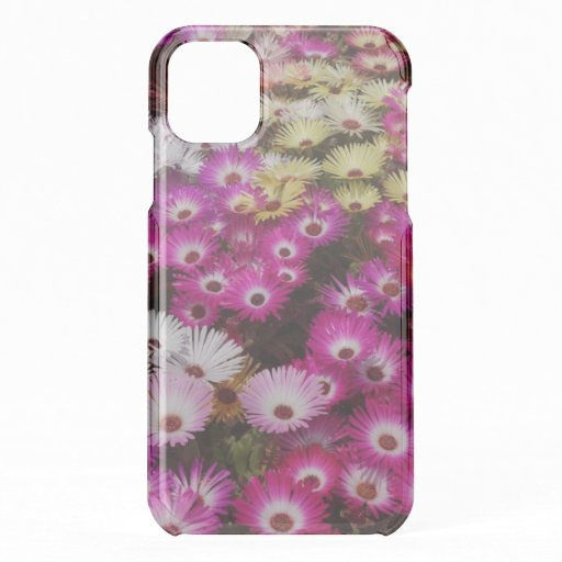 Pretty Livingstone Pink Daisies iPhone 11 Case