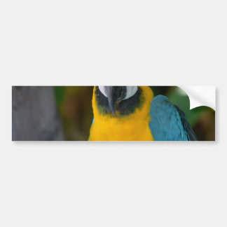 Pretty Macaw Car Bumper Sticker