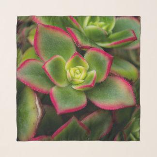 Pretty Macro Cactus Center Square Chiffon Scarf