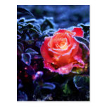 Pretty Magic Frosted Pink Fantasy Rose Garden Postcard