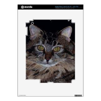 Pretty Maine Coon Cat iPad 3 Skin