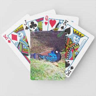 Pretty Male palawan peacock-pheasant Bird sitting Bicycle Playing Cards