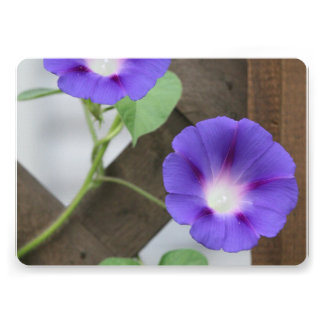 Pretty Morning Glories Personalized Announcements