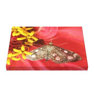 Pretty Moth on Red Flower Canvas Print