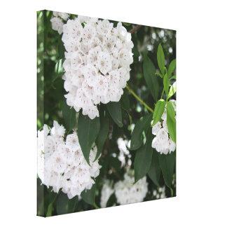 Pretty Mountain Laurel White Flowers Canvas Print
