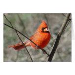 Pretty Northern Cardinal Red Bird Card