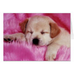 Pretty on Pink Greeting Cards