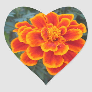 Pretty Orange Marigold Heart Sticker