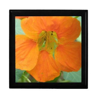 Pretty Orange Nasturtium Flower Gift Box