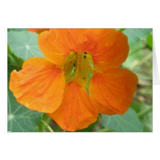 Pretty Orange Nasturtium Flower Greeting Card