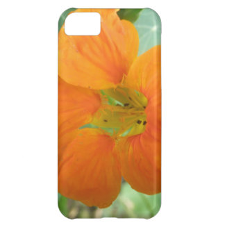 Pretty Orange Nasturtium Flower iPhone 5 Case