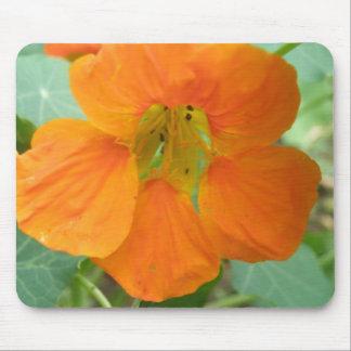 Pretty Orange Nasturtium Flower Mousepad