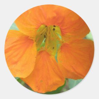 Pretty Orange Nasturtium Flower Stickers