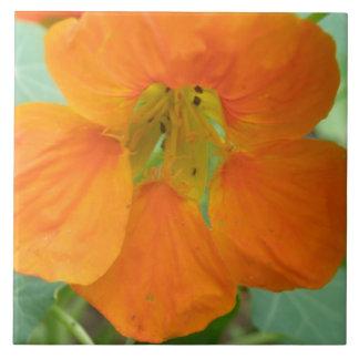 Pretty Orange Nasturtium Flower Tile