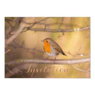 Pretty Orange Robin In The Woods Card