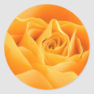 Pretty Orange Rose Classic Round Sticker