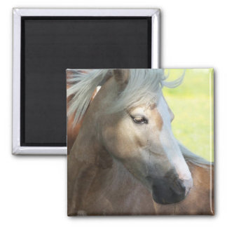 Pretty Palomino Magnet Magnets