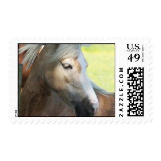 Pretty Palomino Postage Stamp