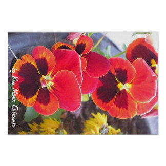 Pretty Pansies by ©Kim Marie Ostrowski Poster