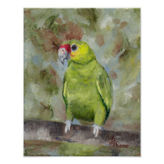 Pretty Parrot III Poster