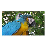 Pretty Parrots Double-Sided Standard Business Cards (Pack Of 100)