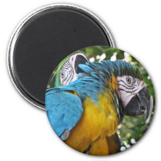 Pretty Parrots 2 Inch Round Magnet