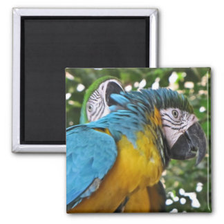 Pretty Parrots 2 Inch Square Magnet
