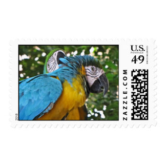 Pretty Parrots Stamp