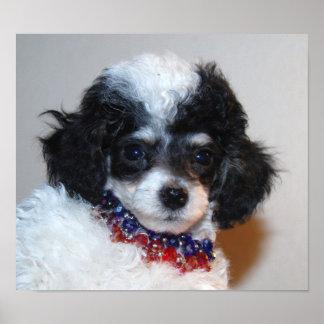 Pretty Parti Poodle Puppy Face Poster
