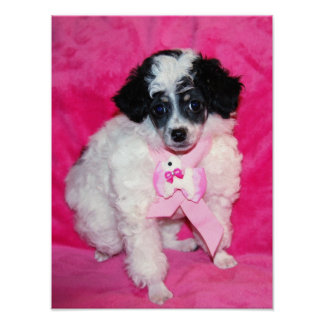 Pretty Parti Poodle Puppy in Pink Poster