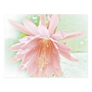 Pretty Pastel Flower Postcard