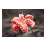 Pretty Peach Flower Photo