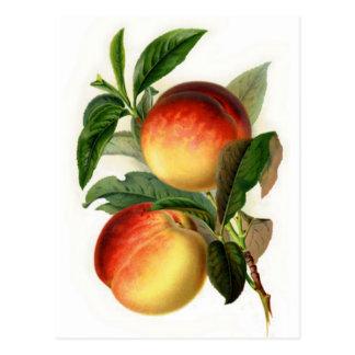 Pretty Peaches Postcard