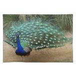 Pretty Peacock American MoJo Placemats
