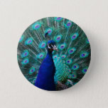 Pretty Peacock Button
