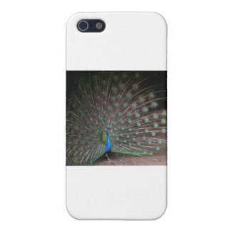 Pretty Peacock Case For iPhone 5