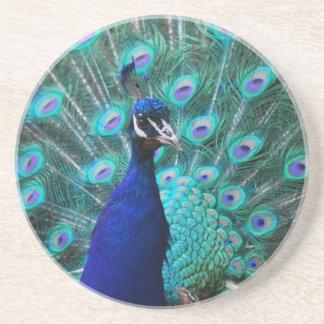 Pretty Peacock Coaster