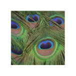 Pretty Peacock Feathers Wood Wall Art