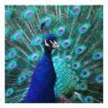 Pretty Peacock Invitations