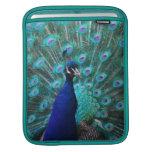 Pretty Peacock iPad Sleeve
