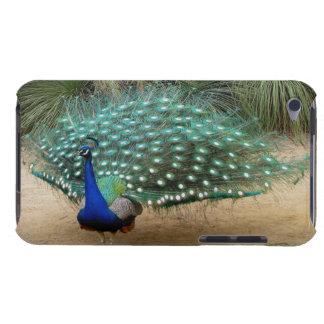 Pretty Peacock iPod Case iPod Case-Mate Cases
