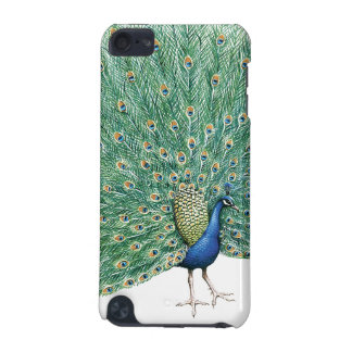 Pretty Peacock iPod Touch (5th Generation) Cover